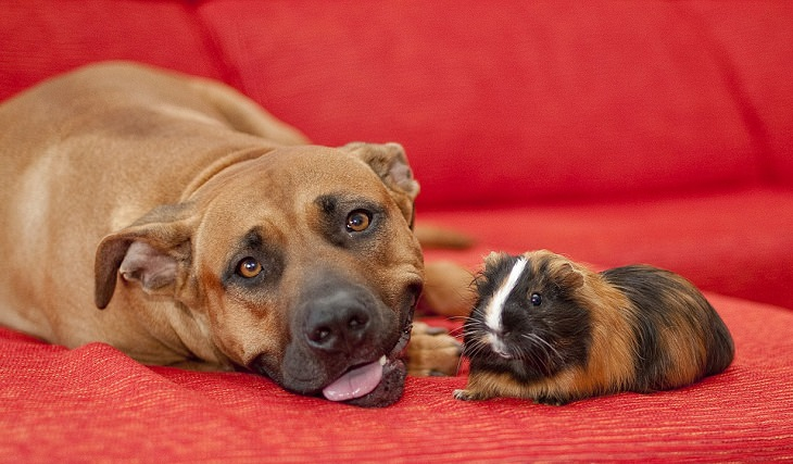 כלב ושרקן על ספה