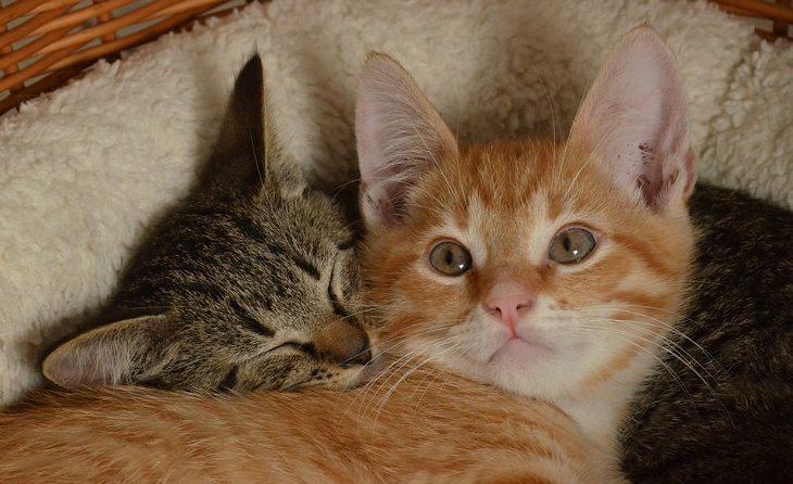 שני חתולים מתכרבלים