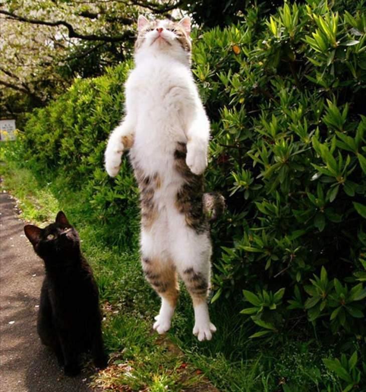 חתולים שנתפסו בעדשת המצלמה ברגע מביך במיוחד