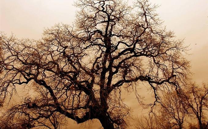 עץ על רקע אפל