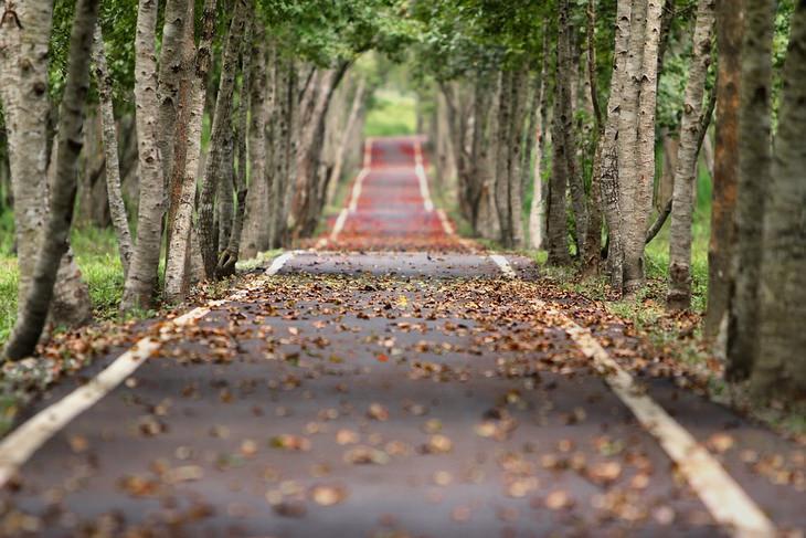 כביש בין שדרת עצים