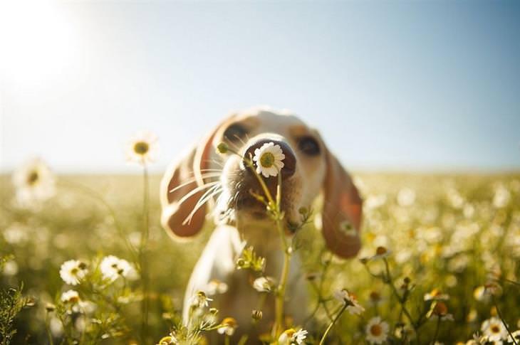 תצלומי כלבים