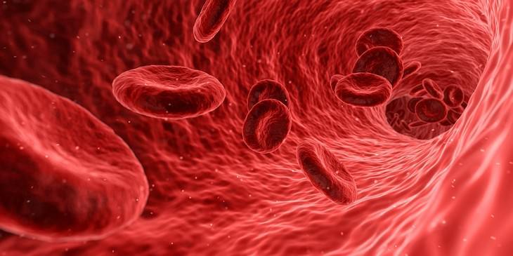 תאי דם אדומים נעים בתוך כלי דם