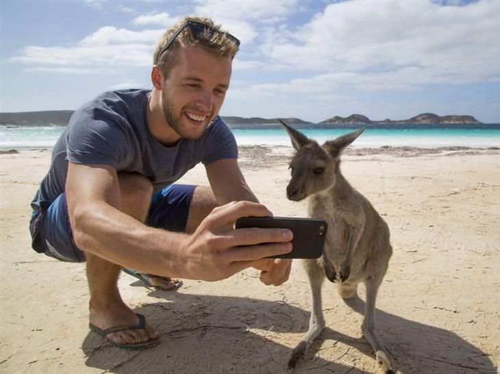 תמונות מרהיבות של אוסטרליה - צילום עם קנגרו סמוך לעיר אספרנס שבמערב אוסטרליה