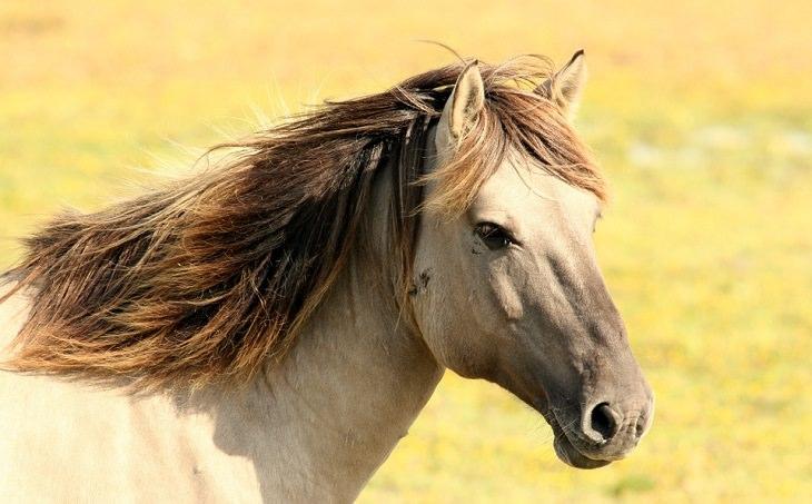 בדיחה על סוסים ישראלים: סוס