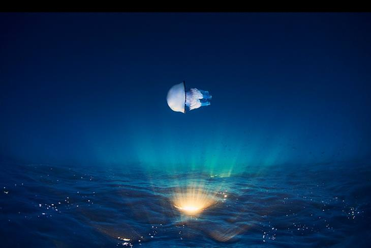תמונות מתחרות צילום טבע: מדוזה שוחה בתוך מים