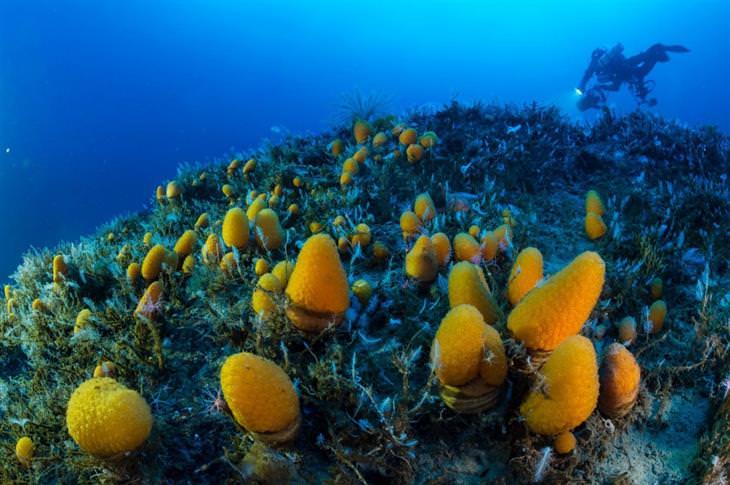 תמונות שצולמו במים מתחת ליבשת אנטארקטיקה: צמחים בתוך המים