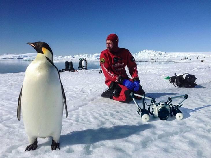 תמונות שצולמו במים מתחת ליבשת אנטארקטיקה: הצלם לורן בלסטה מתכונן לצלילה