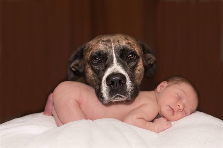 מצבים שמסכנים ילדים במגע עם חיידקים: כלב משעין את ראשו על ילד שישן