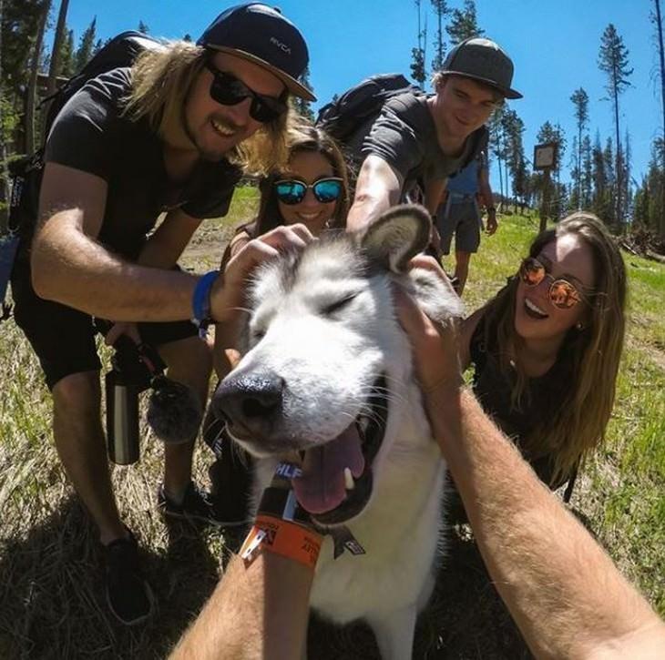 חיות מחמד מטיילות: אנשים מלטפים כלב שעומד על דשא