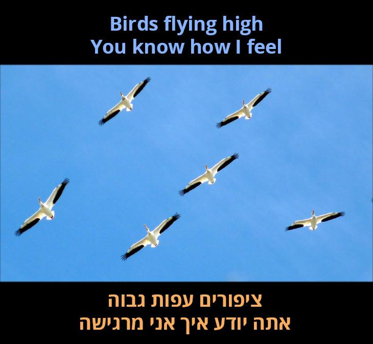 ציפורים עפות גבוה אתה יודע איך אני מרגישה