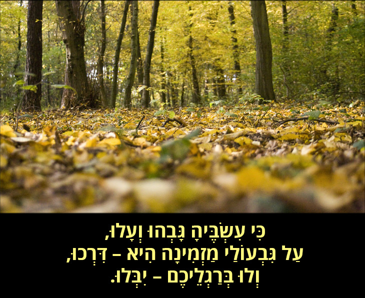 הדרך שלא נבחרה: כִּי עִשְׂבֶּיהָ גָּבְהוּ וְעָלוּ, עַל גִּבְעוֹלַי מַזְמִינָה הִיא – דִּרְכוּ, וְלוּ בְּרַגְלֵיכֶם – יִבְּלוּ.