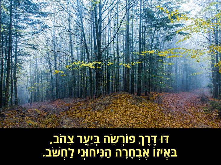 הדרך שלא נבחרה: דּוּ דֶּרֶךְ פּוֹרְשָׂה בְּיַעֲר צָהֹב, בּאֶיזוֹ אֶבְחָרָה הַנִּיחוּנֲי לַחְשֹׁב.
