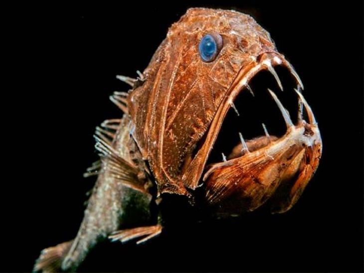 יצורים ממעמקי הים: ניבן תהומות