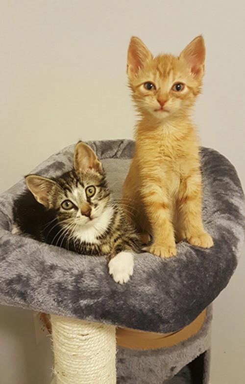 תמונות של גורי חתולים שגדלים תוך לחיצה אחת