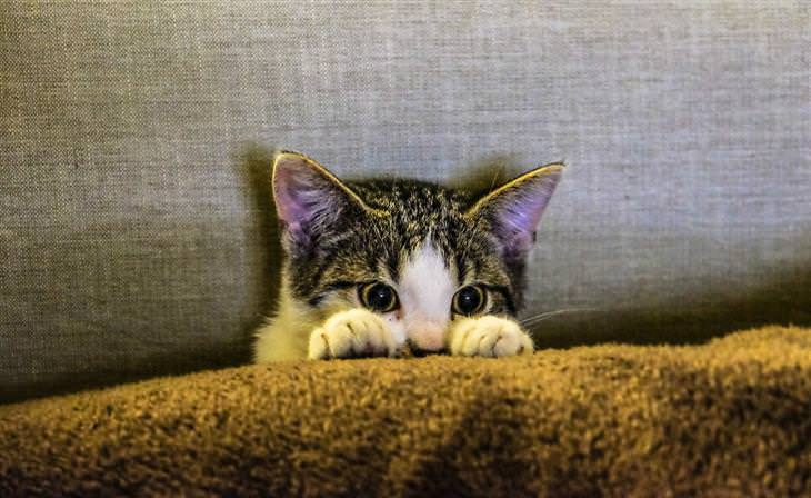 סוגי אישיות של חתולים: חתול מתחבא ורואים רק את החלק העליון של פניו