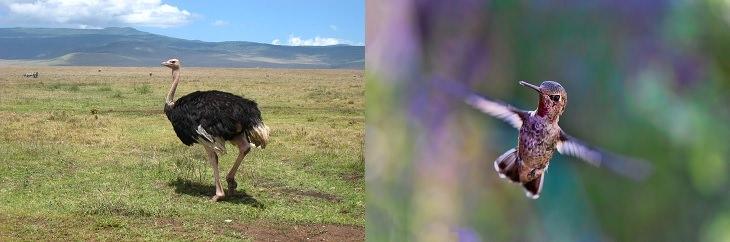 בעלי החיים המהירים בעולם: יונק דבש ויען