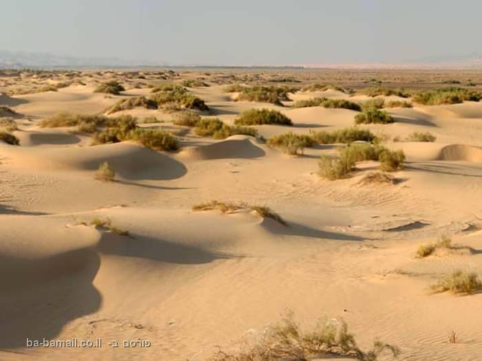 בסכנת הכחדה: הדיונה הגדולה בערבה