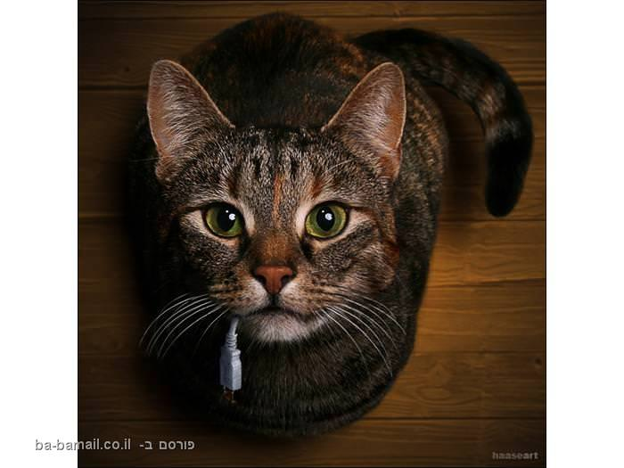 חתולה מחזיקה USB