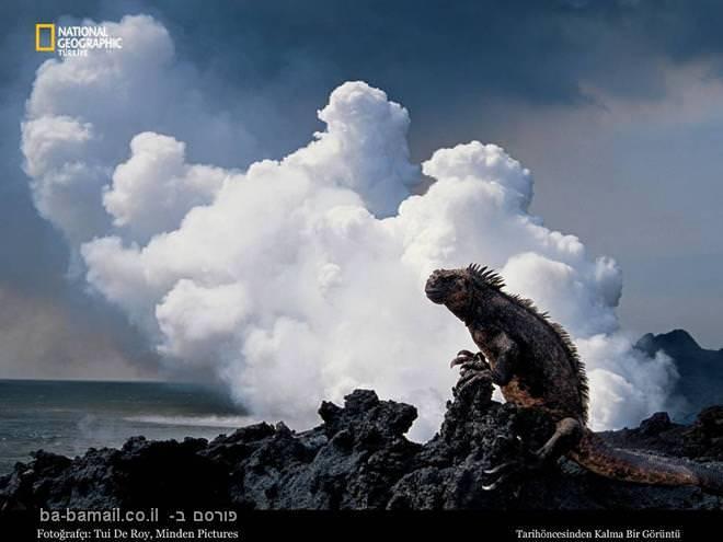 תמונות מדהימות מהנשיונל ג'אוגרפיק