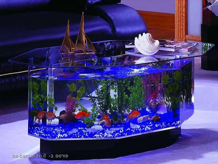 שולחן סלון, אקווריום, דגים, תמונה, עיצוב