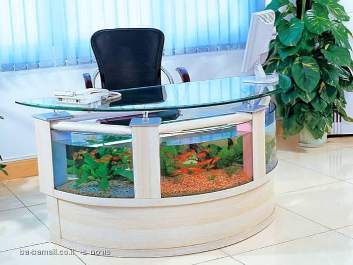 שולחן, אקווריום, דגים, תמונה, עיצוב