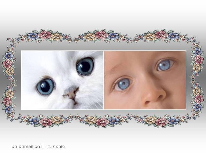 דמיון, בעל חיים, תינוק, חתול, עיניים