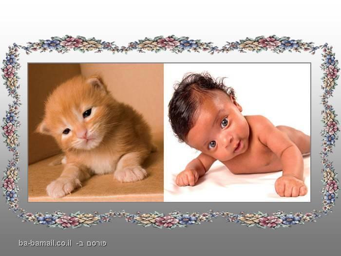 דמיון, בעל חיים, תינוק, חתול, ג'ינג'י