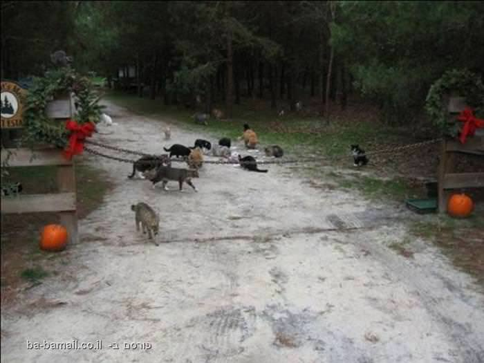 חתולים, קרייג גרנט, עיר החתולים, חיות, בעלי חיים