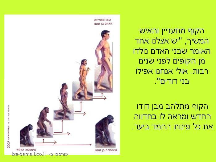 קוף, אריה, שימפנזה, סיפור