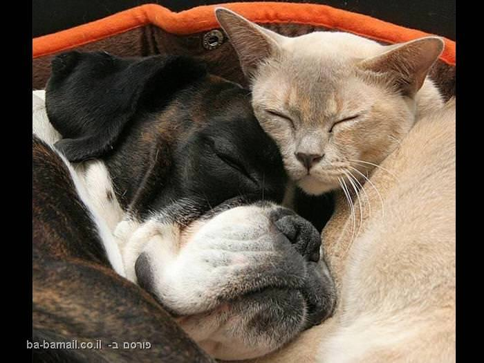 חיות, ישנות, לישון, חיות רדומות, חמוד, מתוק, חתול, כלב, חתול וכלב