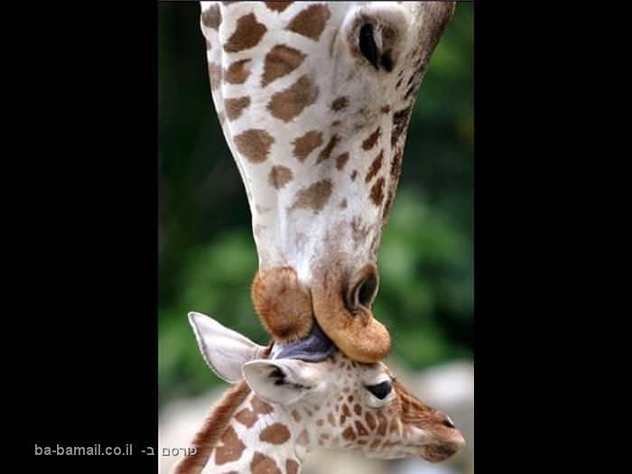 אהבה בטבע - מקסים!