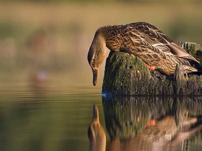 תמונות טבע מדהימות