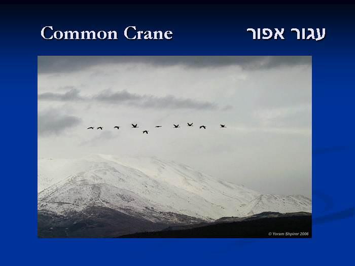 מקור לגאווה - מגוון הציפורים בישראל
