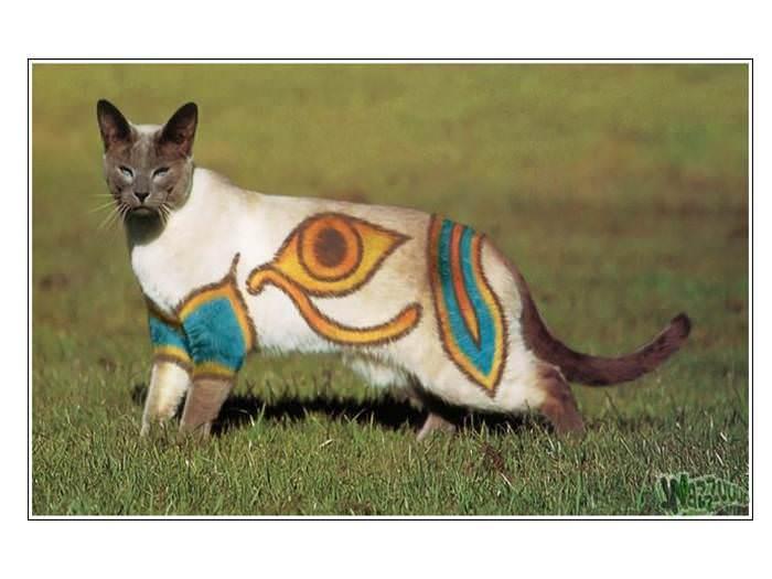 חתולים בצבעים - אומנות יפה או ניצול בע``ח?