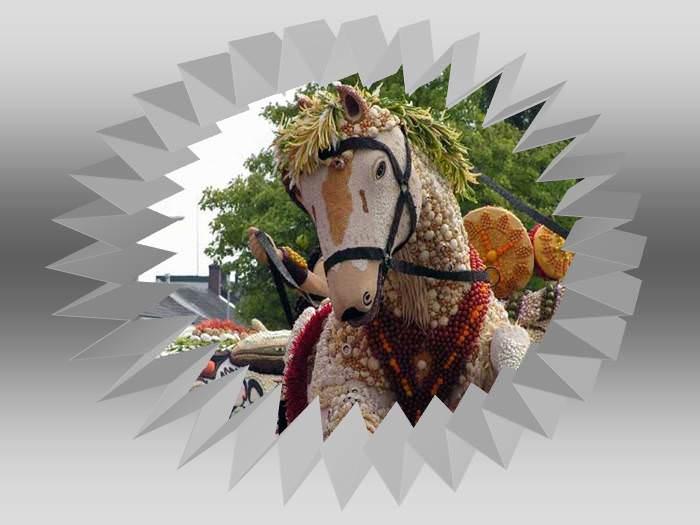 מצעד הפירות ההולנדי - השקעה מדהימה!