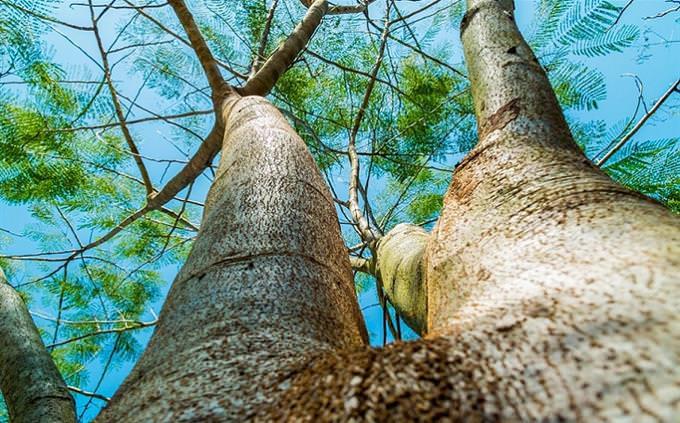 עד כמה אתם שולטים בשפה העברית: עץ