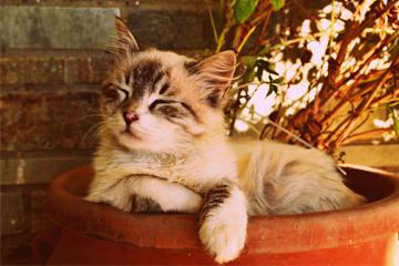 חתול ישן בתוך אדנית