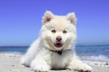 כלב לבן יושב על חול בחוף הים